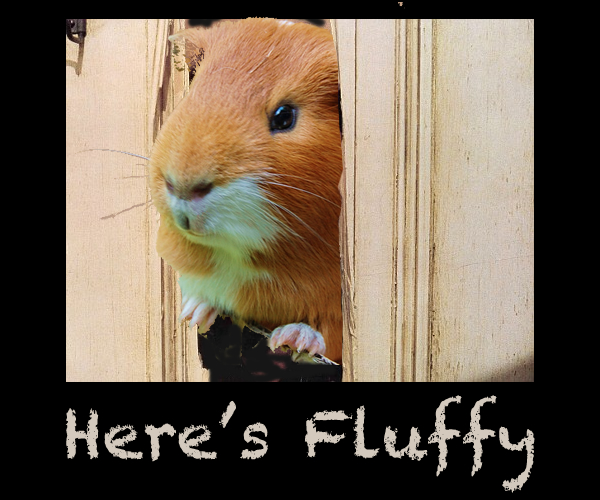 Here's Fluffy